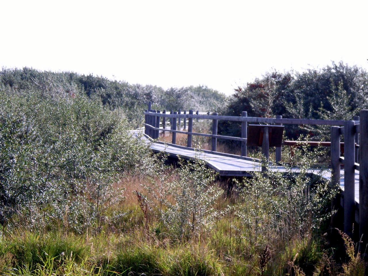 Naturlehrpfad Speicherkoog Nationalpark Wattenmeer